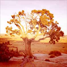 Tree on Highway70